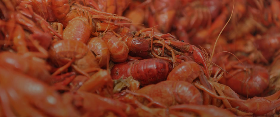 crawfish boil catering dallas