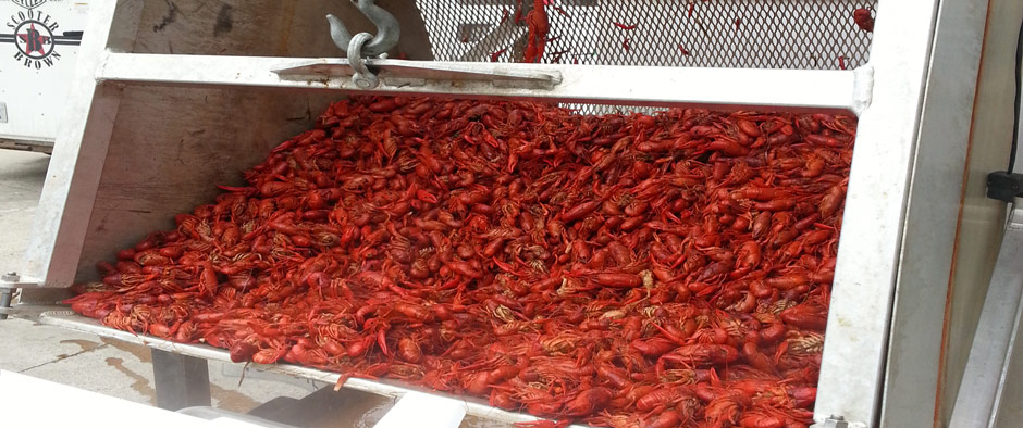 crawfish boil catering college events